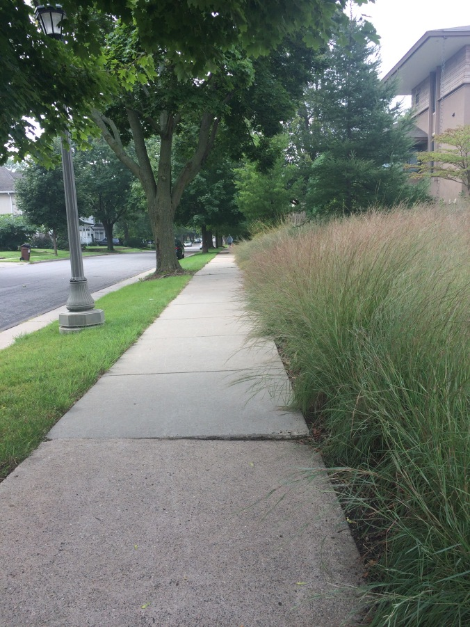 native grasses