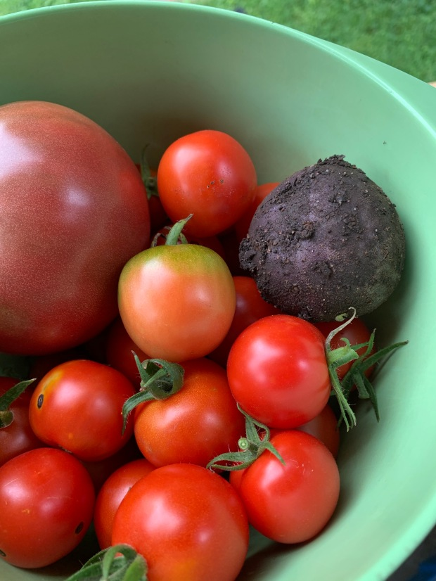 tomatoes and a potato in a green bowl
